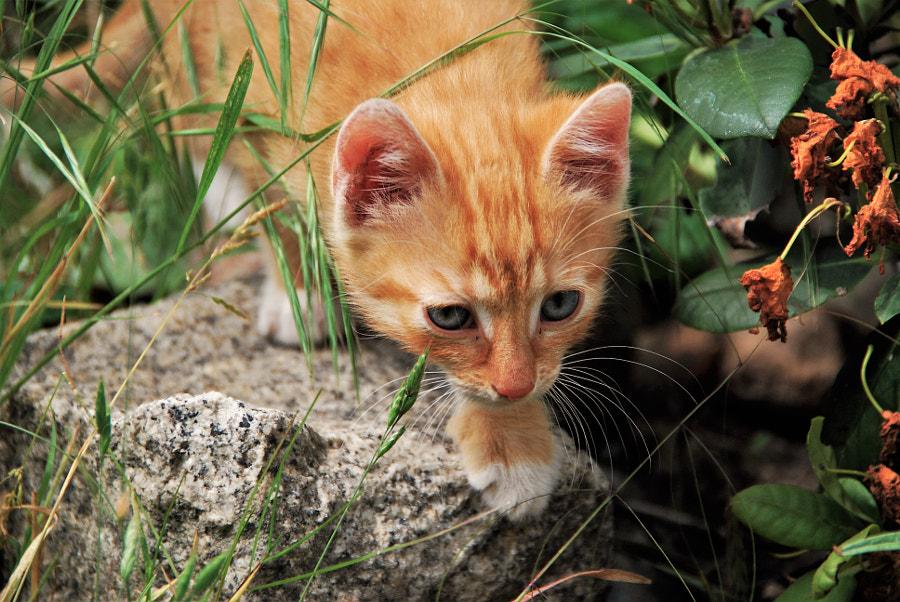 curious cat, автор — moonsun  на 500px.com