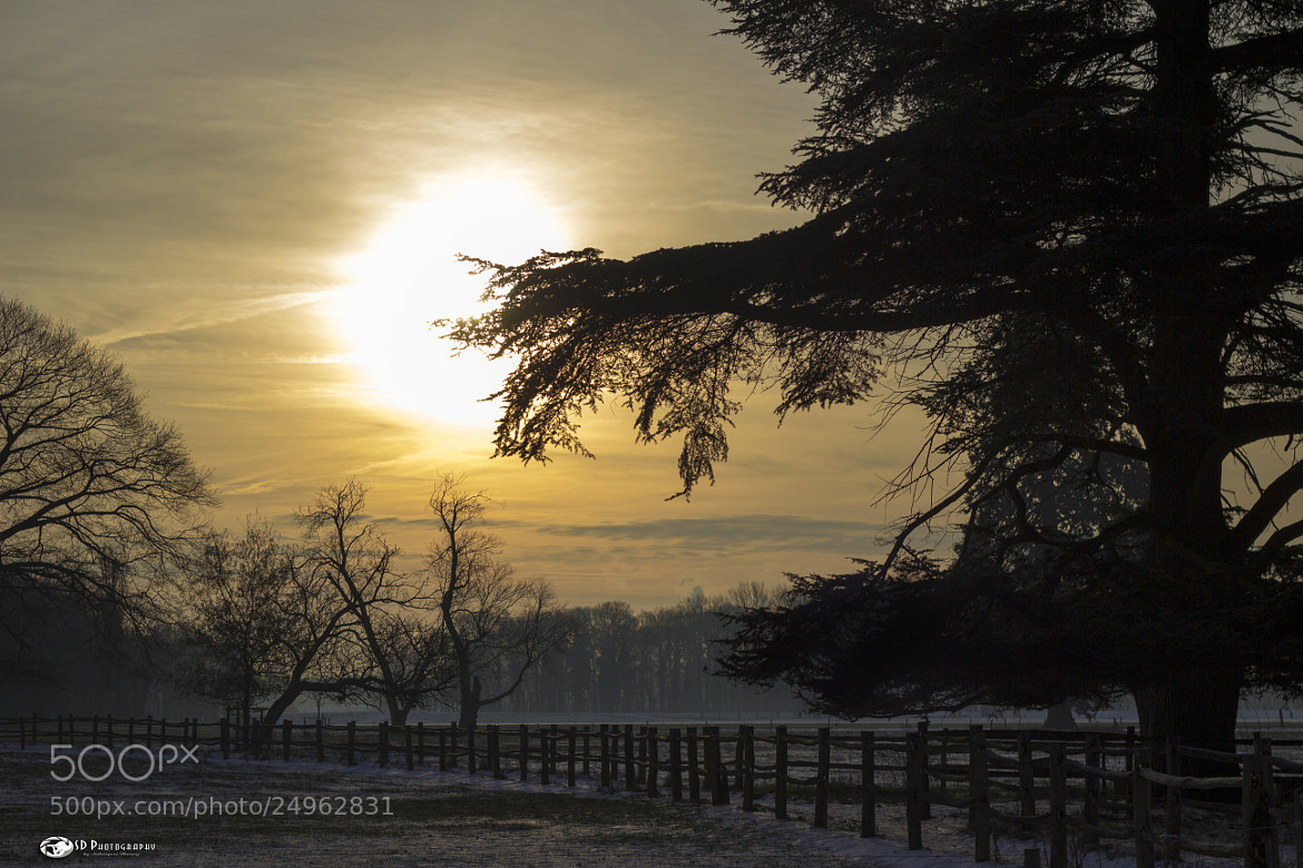 Photograph Winterscenery 4 by Danny schurgers on 500px