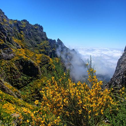Madeira, above the clouds, Panasonic DMC-TZ101