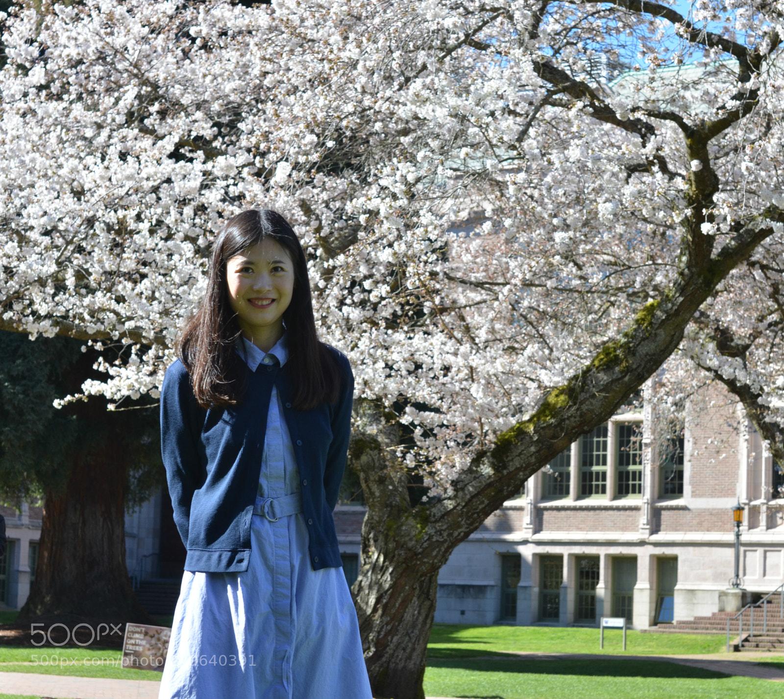 UW Cherry Blossoms, Nikon D7000, Sigma 50mm F1.4 EX DG HSM