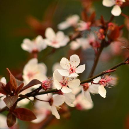 Spring time, Nikon D7000, AF Nikkor 70-210mm f/4-5.6D