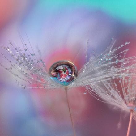 Dandelion dipped in pastel tones
