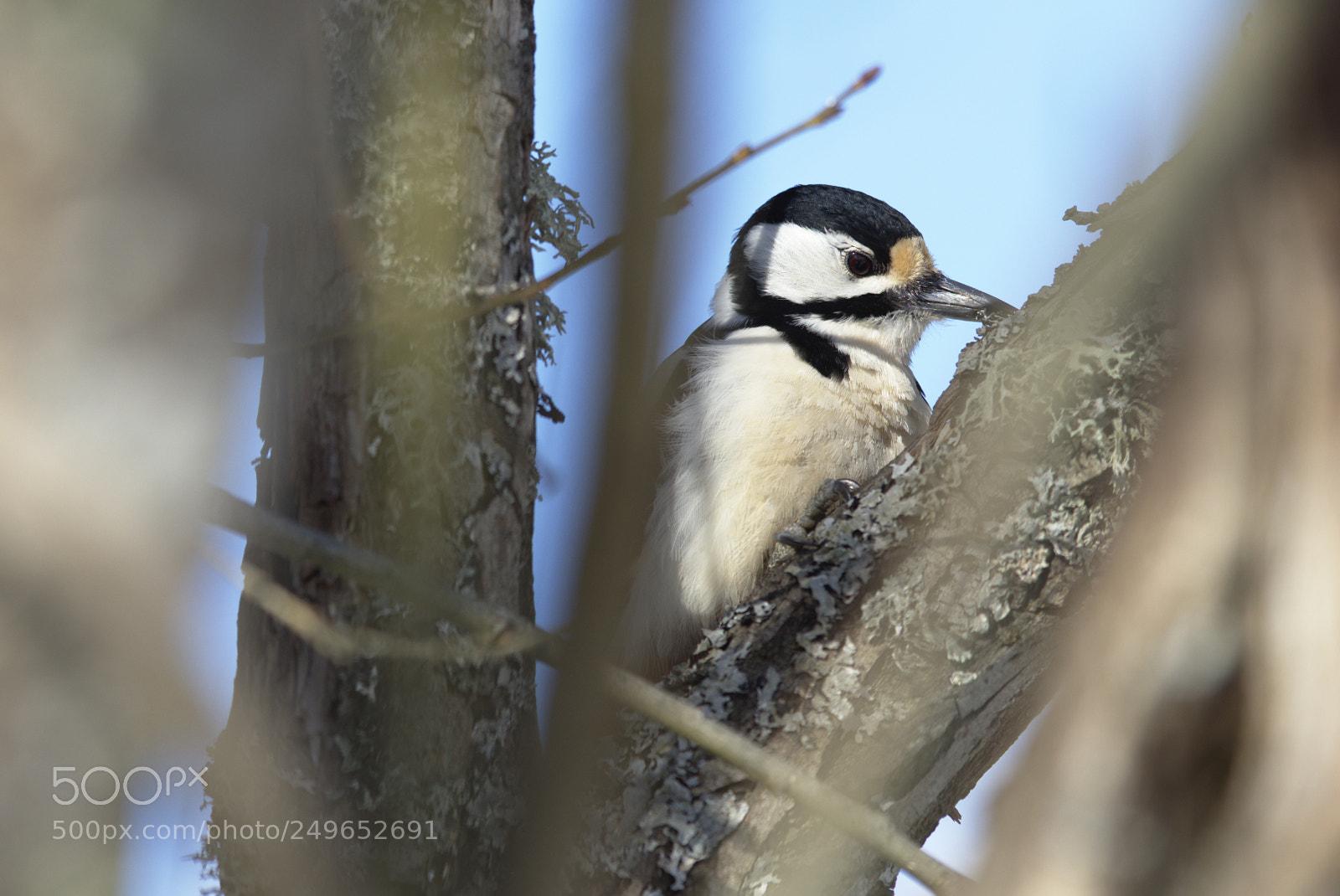 Woodpecker #, Nikon D810, AF-S Nikkor 400mm f/2.8D IF-ED II
