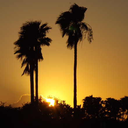 Palm Sunset, Fujifilm FinePix S4400