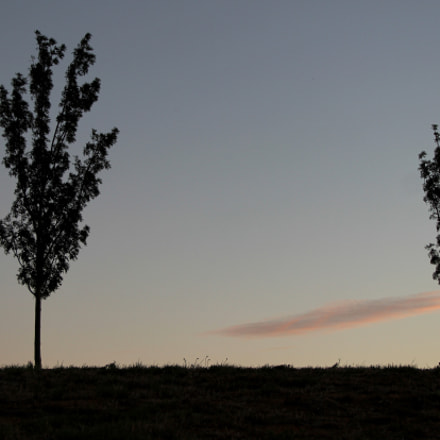 Two Lonely Trees