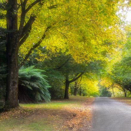 Autumn Road Blue Mountains, Panasonic DMC-FX2