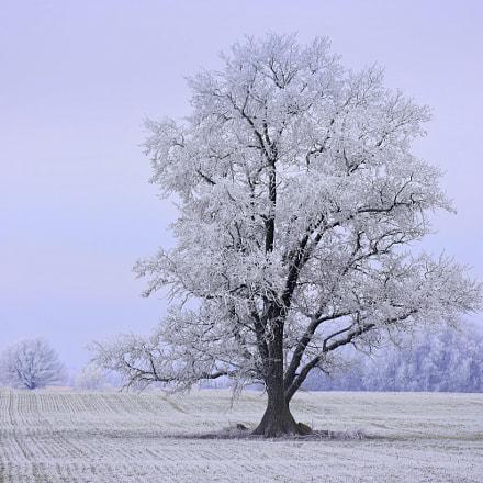 Wintertime, Nikon D3400, AF-S DX Nikkor 55-200mm f/4-5.6G ED VR II
