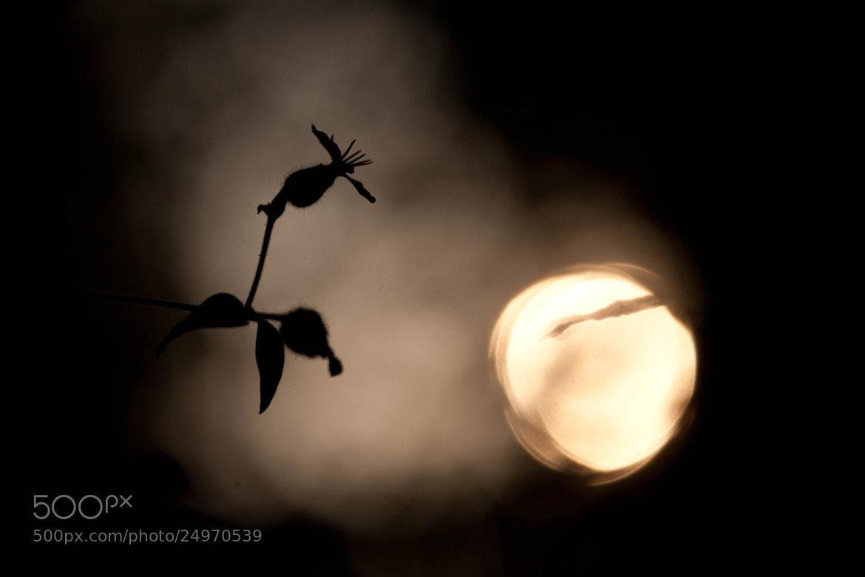 Photograph Dark flower by Stefano Romanò on 500px