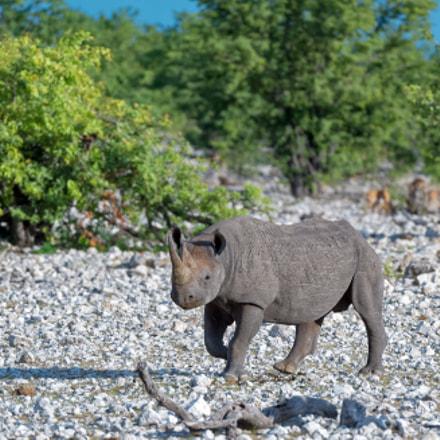 Etosha Rhino, Nikon D4S, AF-S VR Zoom-Nikkor 200-400mm f/4G IF-ED