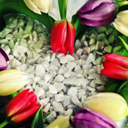 Tulips, Canon EOS 1300D, Canon EF-S 18-55mm f/3.5-5.6 III