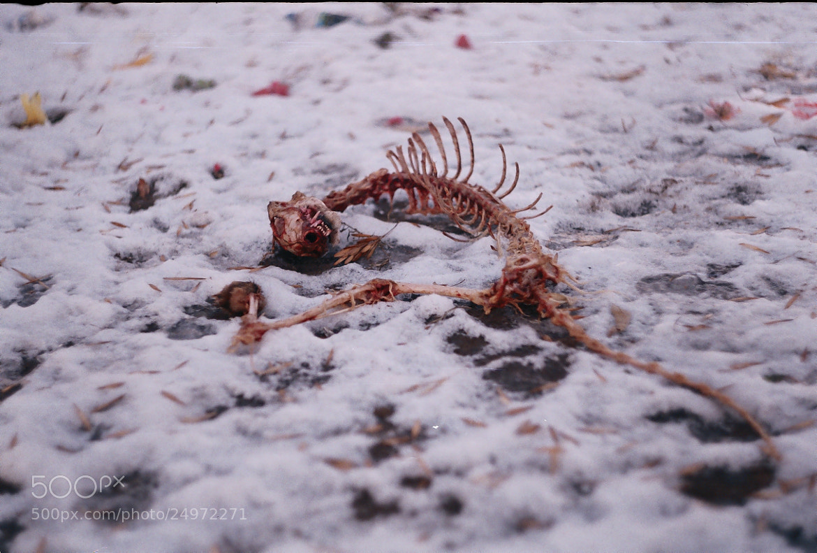 Photograph Death by ADME on 500px