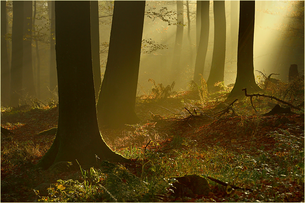 Photograph Wohlfühlmorgen by Ingrid Lamour on 500px