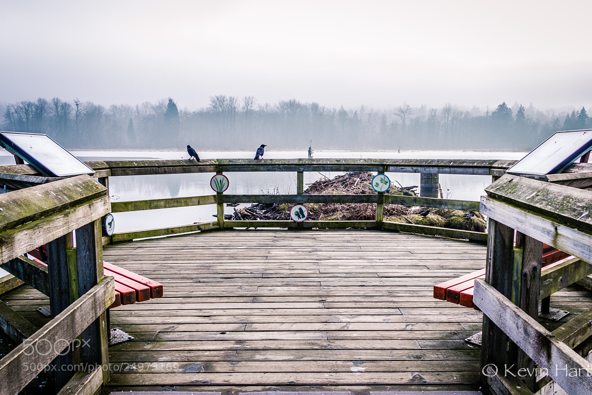 Photograph Symmetry. And Crows. by Kevin Hart on 500px