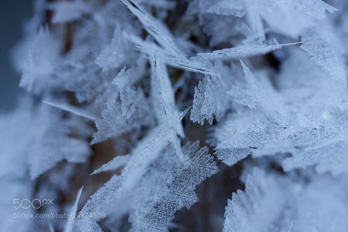 Photograph Rime 2.0 by Marcus Kam on 500px