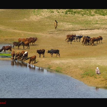 Life at Chanab River, Panasonic DMC-TZ30