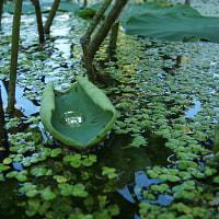 Lotus Boat