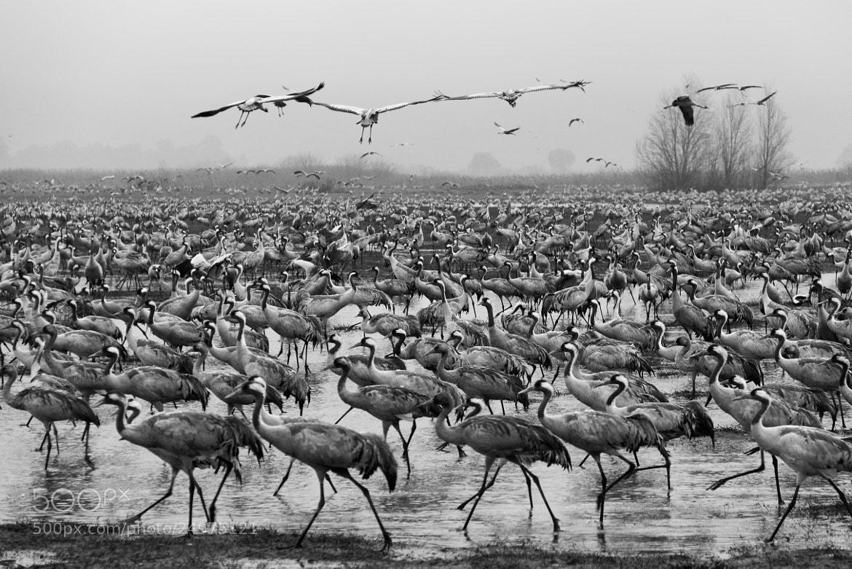 Photograph Exodus by Rotem Littman on 500px