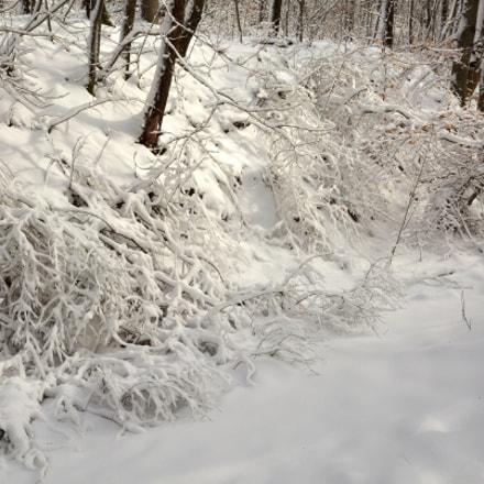 Sunlight, snow, tenderness, Nikon D7100, AF-S DX VR Zoom-Nikkor 16-85mm f/3.5-5.6G ED