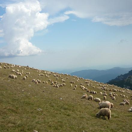 sheeps, Panasonic DMC-LS80