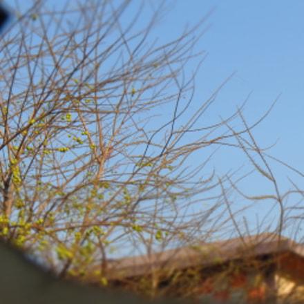 The Autumn Tree ...., Canon IXUS 510 HS