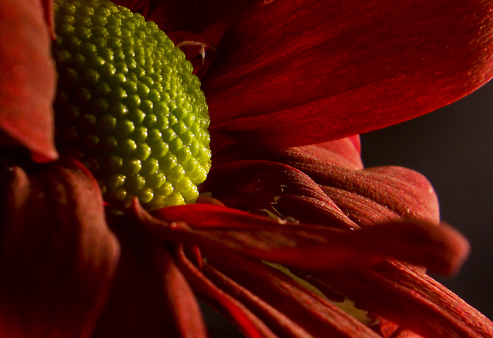 Photograph Red loves green.. by Serdar Gür on 500px