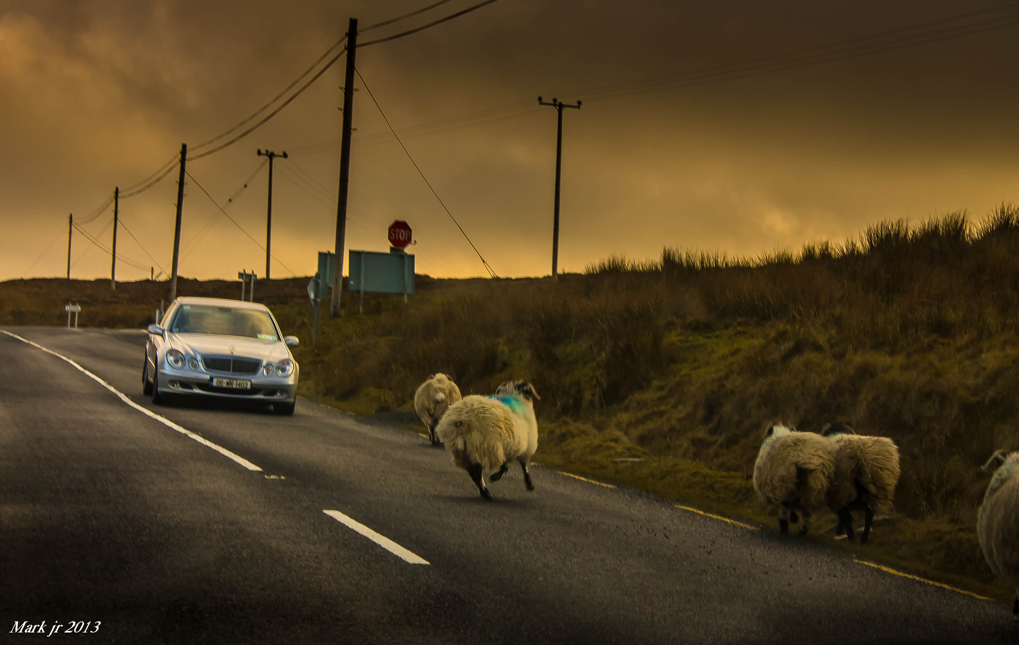 Photograph No sheep where hurt in the taking of this by markjohnston87 on 500px