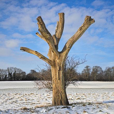 Dead Tree in Winter, Canon EOS 30D, Canon EF 28mm f/2.8