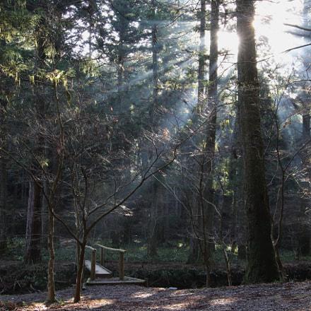 朝の光。, Canon EOS 7D MARK II, Sigma 24mm f/1.4 DG HSM | A