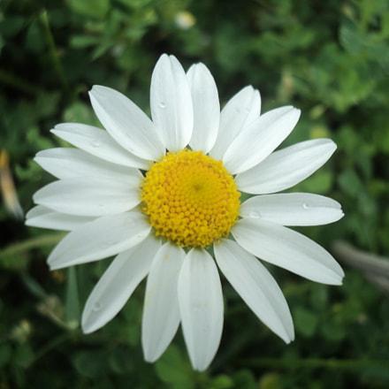 Flower, Sony DSC-S2000