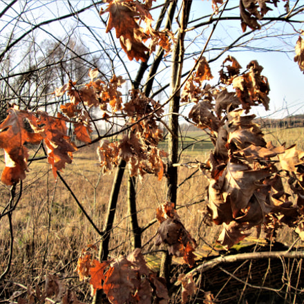 Fall sharpness, Canon POWERSHOT A810
