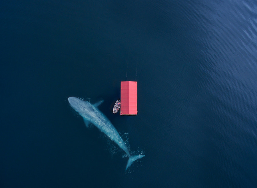 The Whale de alessandro fisco en 500px.com
