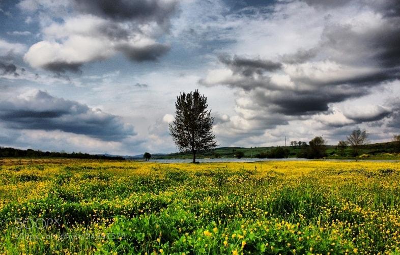 Photograph lonely tree... by Zeynep Özkuş on 500px