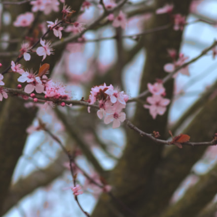 spring, Canon EOS 7D, Canon EF 90-300mm f/4.5-5.6
