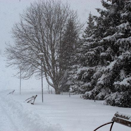 Snowstorm, Nikon D100, AF Zoom-Nikkor 35-70mm f/3.3-4.5
