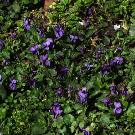 Spring is near, Fujifilm FinePix S9600