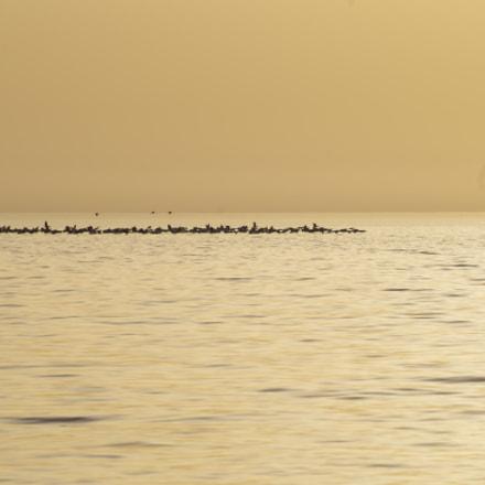 Bird Migration Season, Pentax K-50, smc Pentax-DA L 50-200mm F4-5.6 ED WR