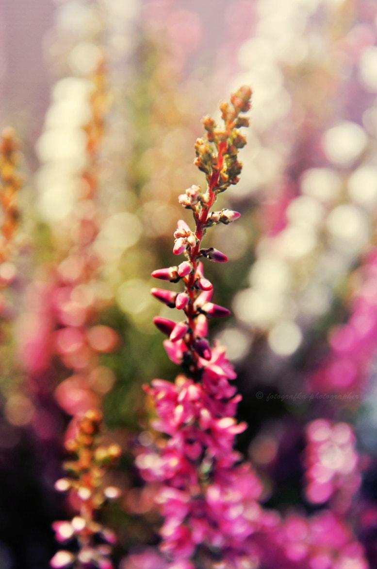 Photograph Battle of bokeh by Anna Tyrała on 500px