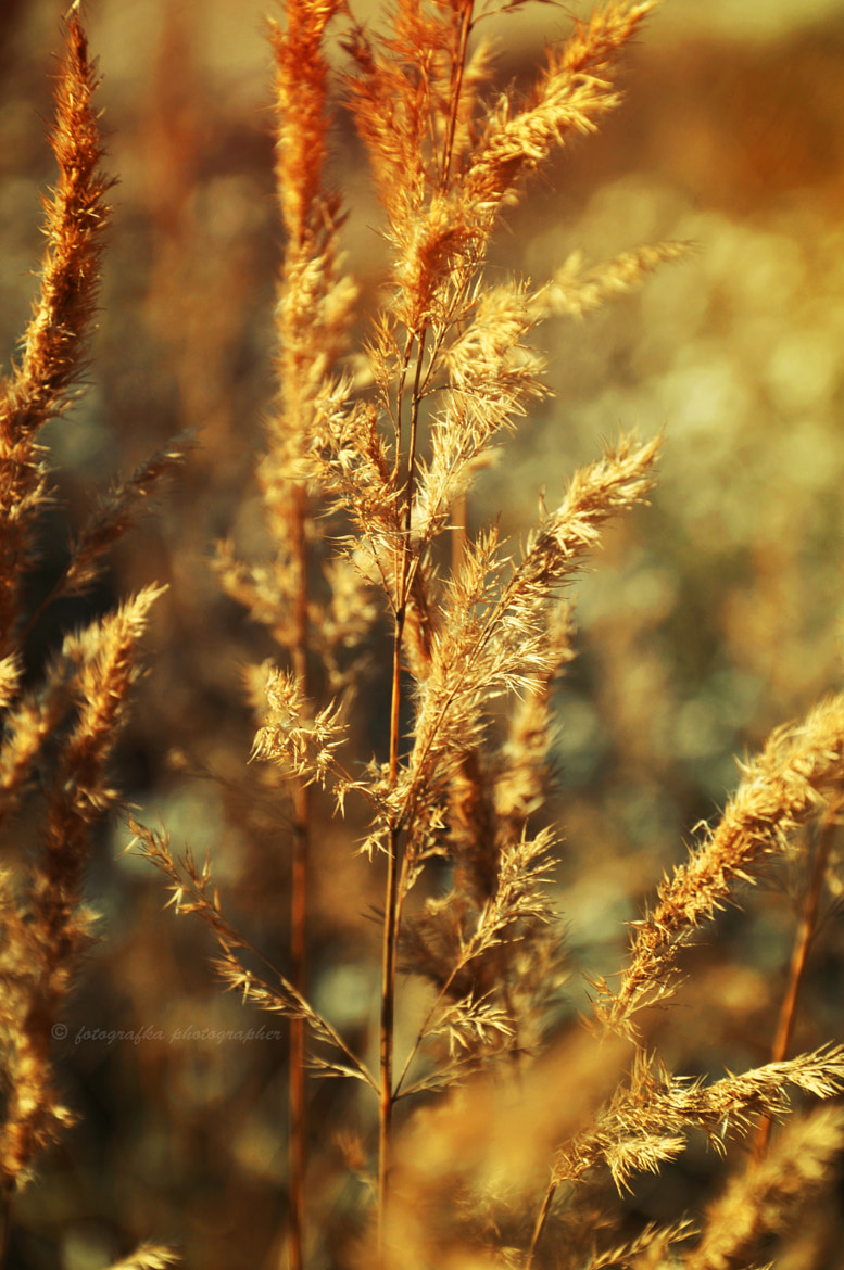 Photograph Catch the rays of the sun by Anna Tyrała on 500px