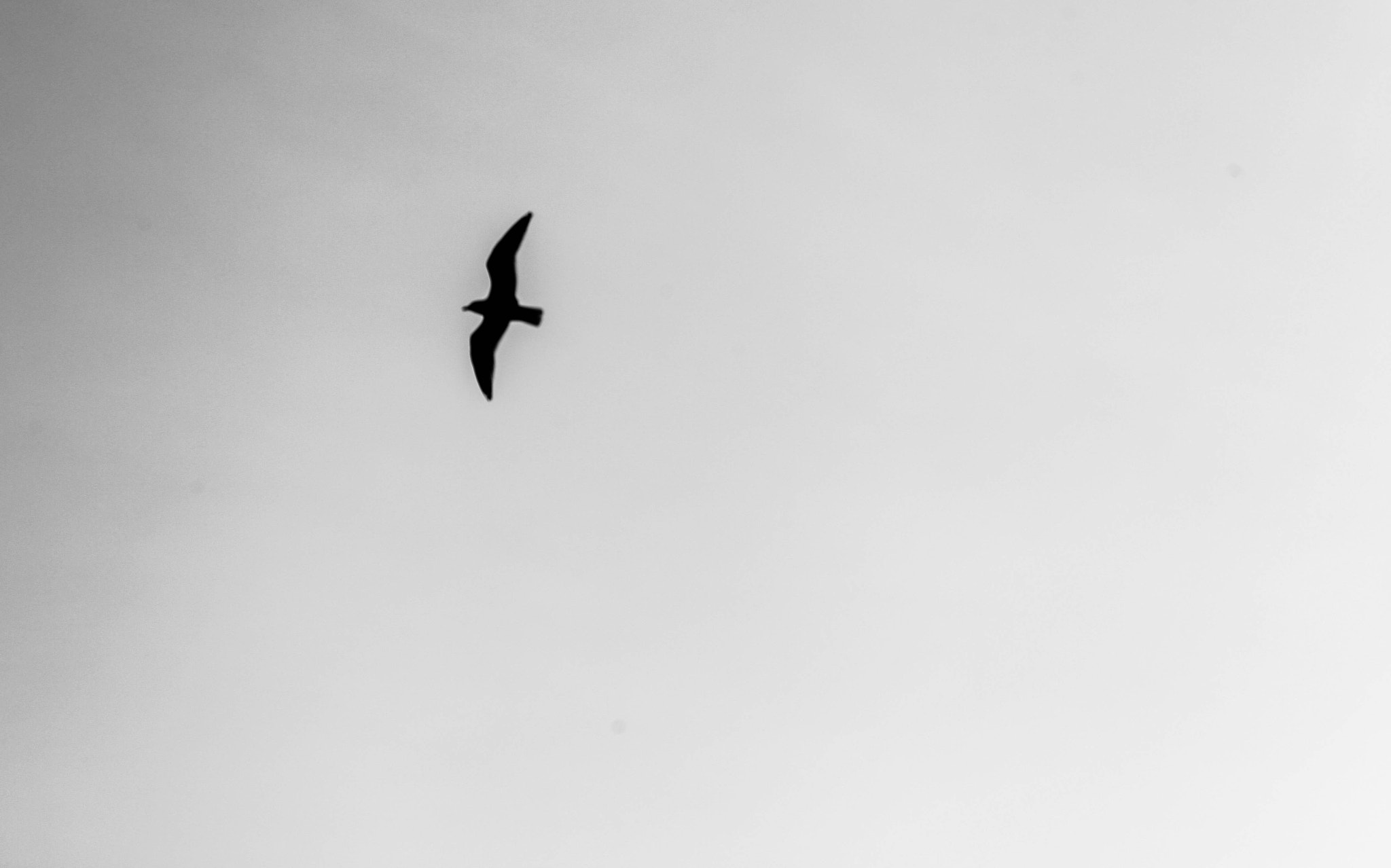 Photograph { Flying in My Own Sky }  by Anh Gerrard  on 500px