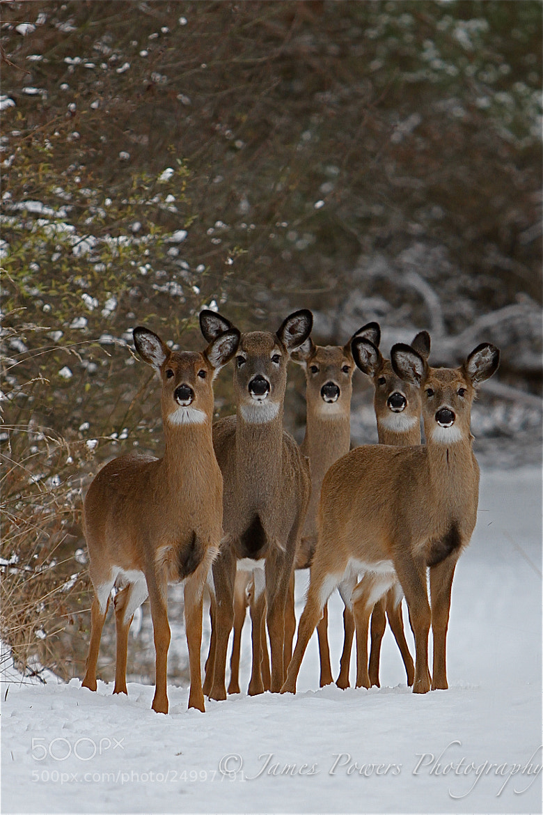 Photograph Winter Wildlife by James Powers on 500px