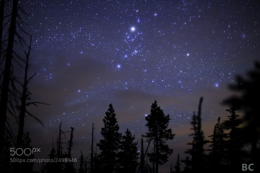 """Here's something very different to my normal """"style.""""  This is chill, no foreground light painting, no glowing tent, no massive snow covered mountain, no reflecting lake. It's just the stars through a forest.  And tonight, that is more than enough :-)"""