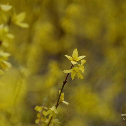 Spring, Pentax K-30, smc PENTAX-DA L 50-200mm F4-5.6 ED