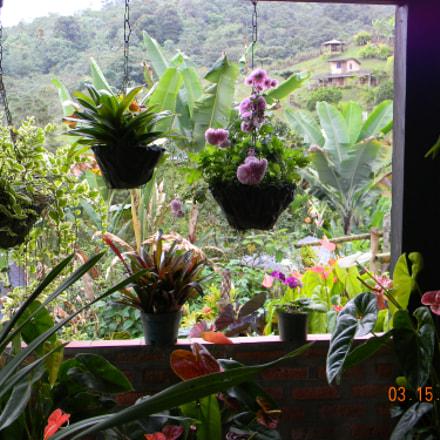 Tropical plants at a, Nikon COOLPIX L110