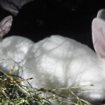 rabbit, Sony DSC-W570