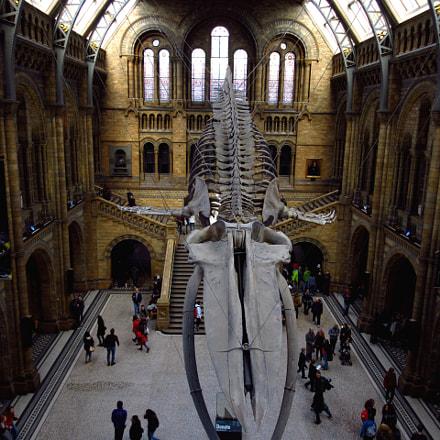 Natural History Museum, London, Canon IXUS 275 HS
