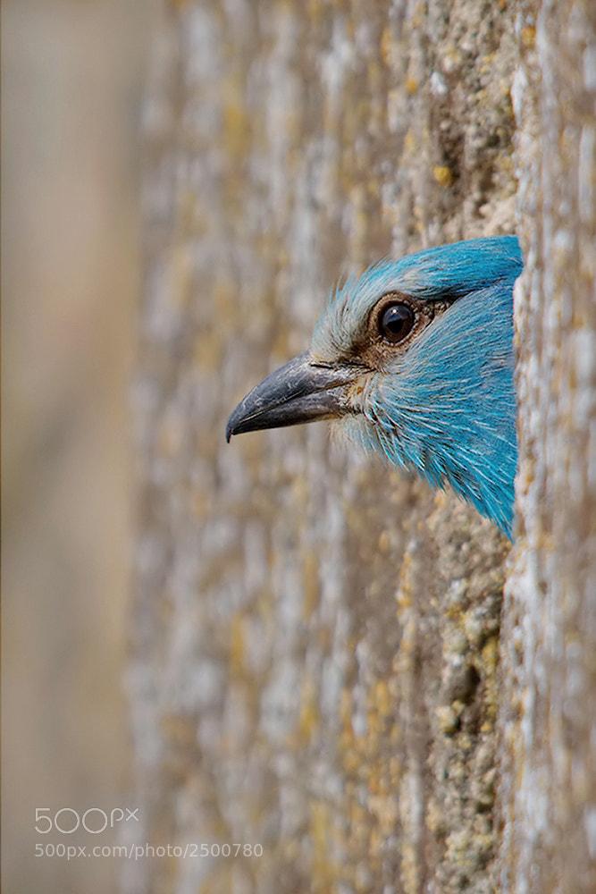 Photograph Peek-a-boo ! by Leonardo Fava on 500px