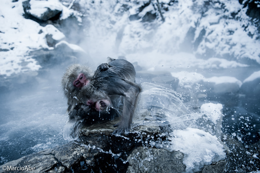 The snow monkeys of Hell