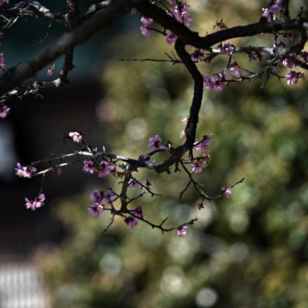 apricot, Nikon D810, AF VR Zoom-Nikkor 80-400mm f/4.5-5.6D ED