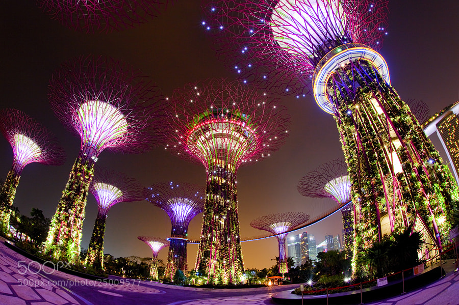 Photograph FACE of SINGAPORE by Taradol Chitmanchaitham on 500px