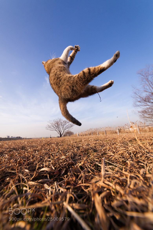 Photograph Catch The Sky by Seiji Mamiya on 500px